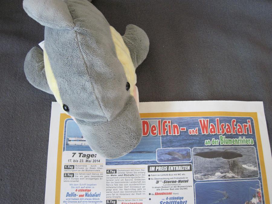 Finn guckt Zeitung (Foto: Susanne Gugeler)