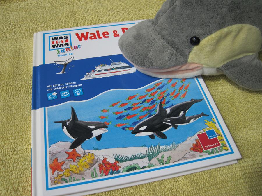 Wale und Delfine (Foto: Susanne Gugeler)