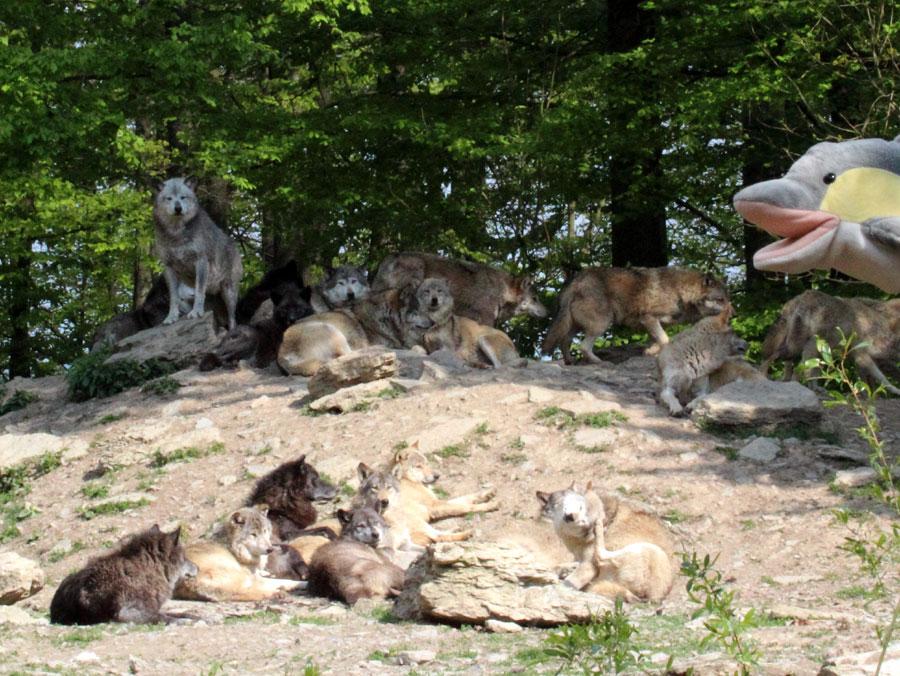 FINN trifft Wölfe (Foto: Rüdiger Hengl)
