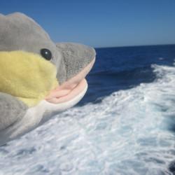 FINN im Ligurischen Meer (Foto: Susanne Gugeler)