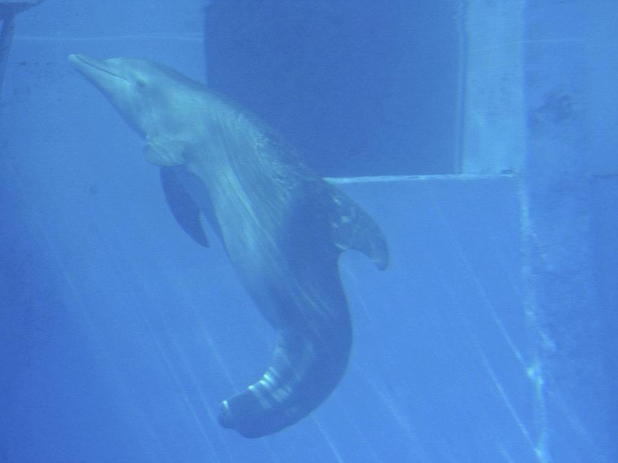 WNTER hat gelernt, ohne Schwanzflosse zu leben. (Foto: Wikipedia)