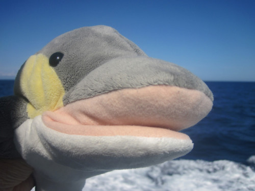 Hier ist mal wieder euer Delfin-Freund FINN! (Foto: Susanne Gugeler)