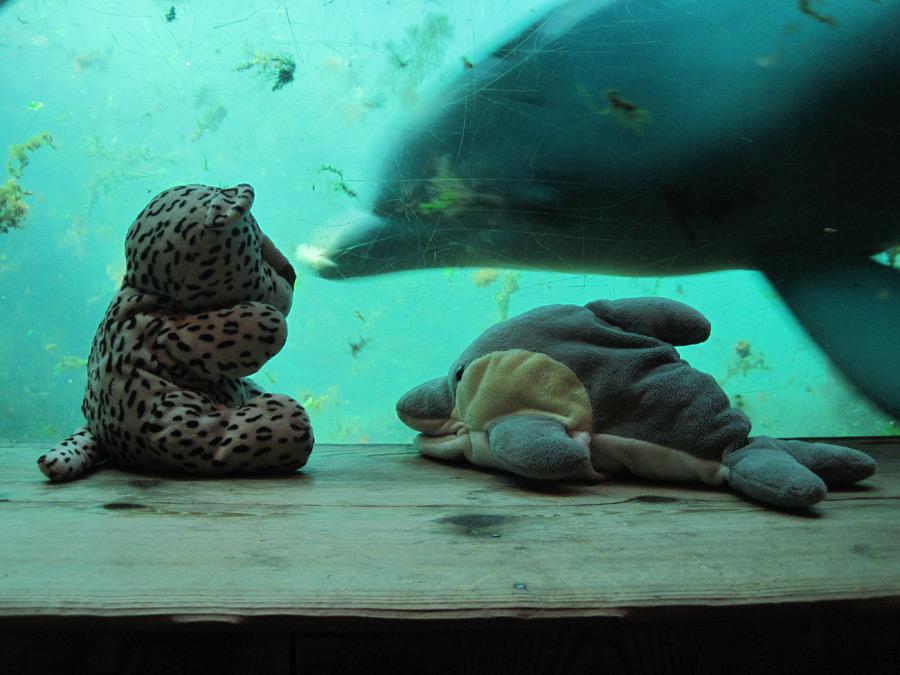 LEO und FINN sind den Delfinen ganz nah. (Foto: Susanne Gugeler)
