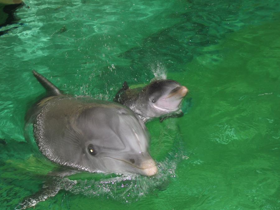 Pepina mit ihrem Baby (Foto: Duisburger Zoo)