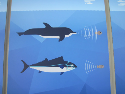 Unterschiedlicher Beutefang (Informationstafel im Aquarium Genua)