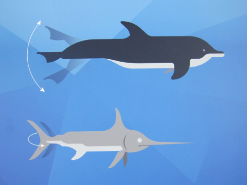 Unterschiedliche Fortbewegung (Informationstafel im Aquarium Genua)