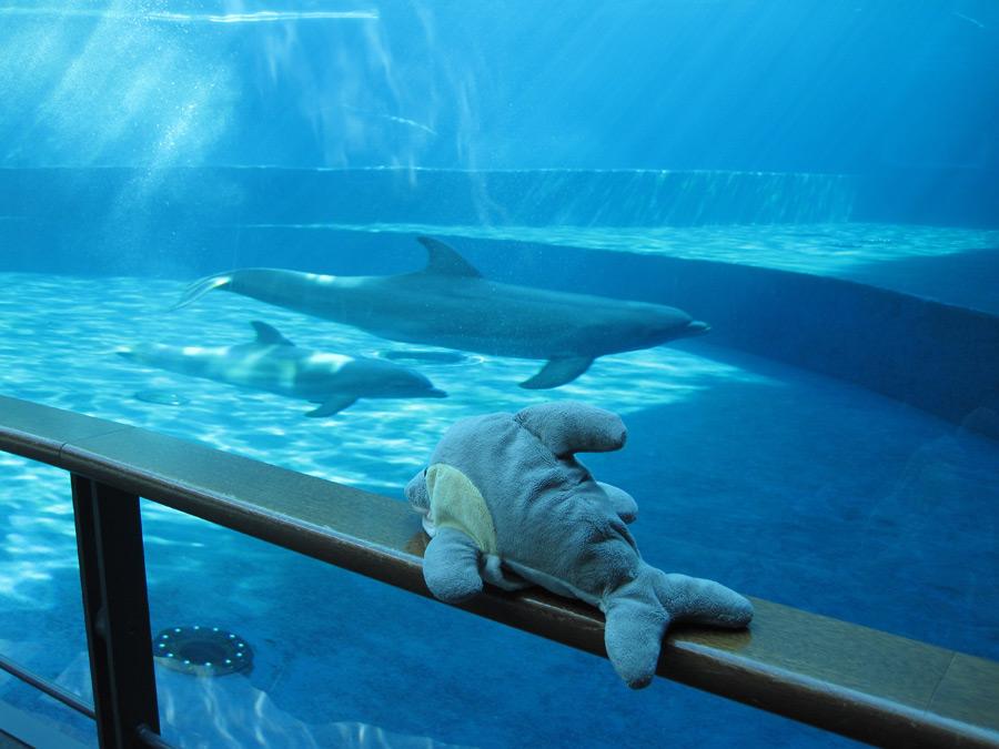 FINN im Aquarium in Genua (Foto: Susanne Gugeler)