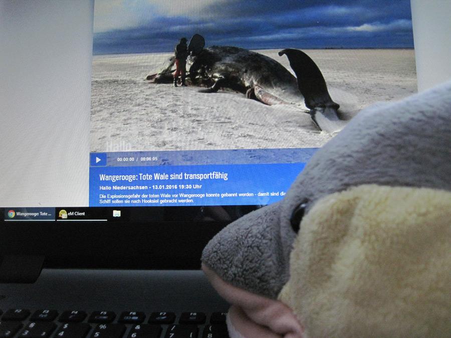 FINN informiert sich über die gestrandeten Pottwale. (Foto: Susanne Gugeler)