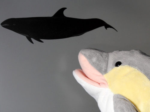 Ein Delfin mit weißem Maul