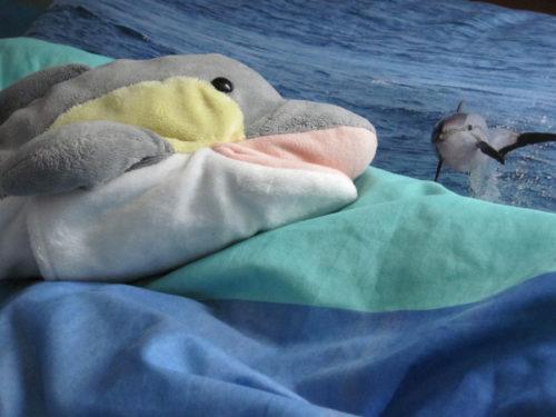 Wie schlafen Delfine?