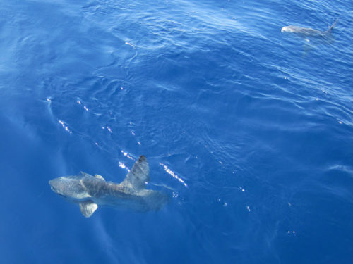 Mondfische (Foto: Susanne Gugeler)