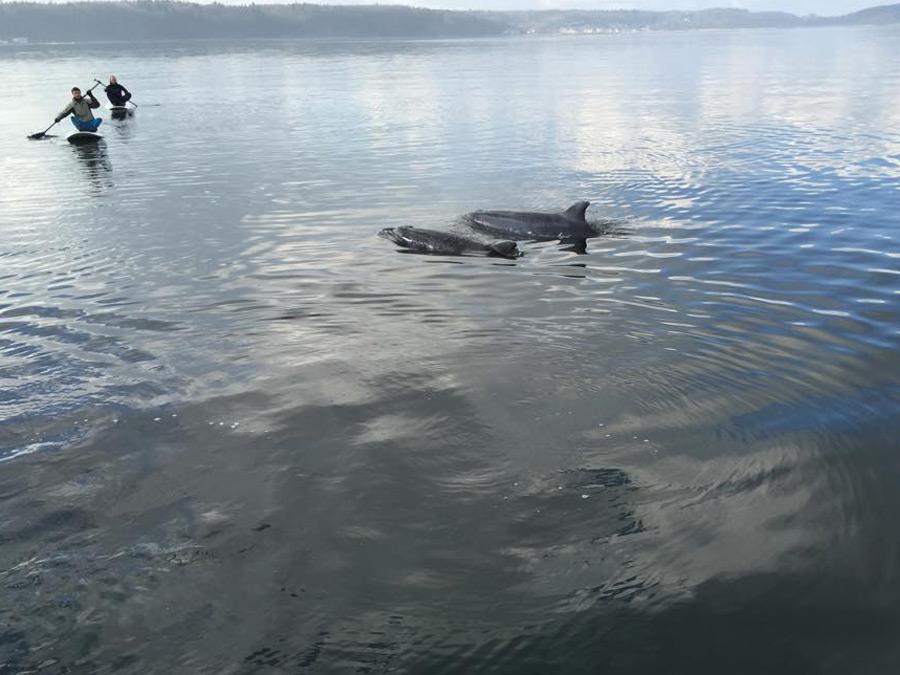 Die Delfine nähern sich den Menschen bis auf ein paar Meter. (Foto: Betty Moog)