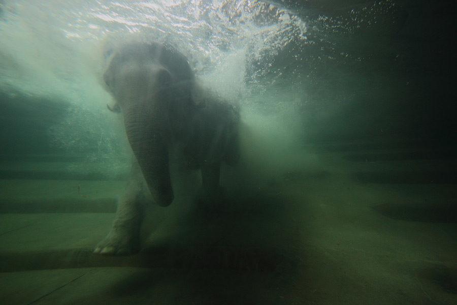 Elefanten tauchen gerne